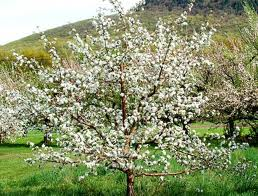 How 'bout them apples?  A Parable about Lent, apple trees, and why giving up is a good thing