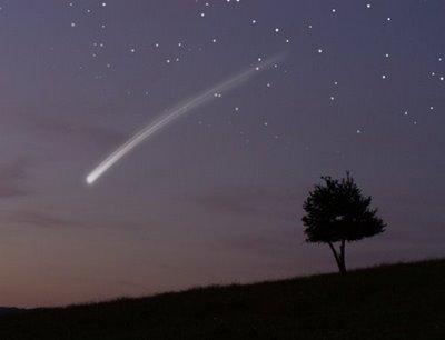 Mockingbird Monday: Oak Trees, Shooting Stars, Rediscovering
